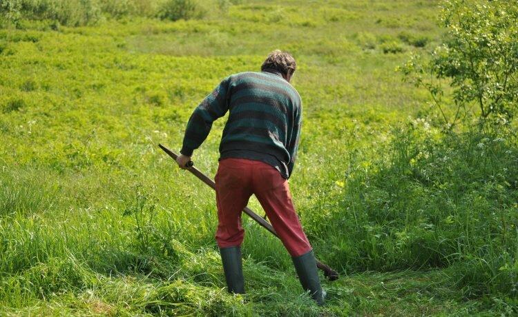 6 Surprising Health Benefits of Gardening