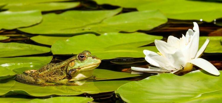 How to create water garden ponds
